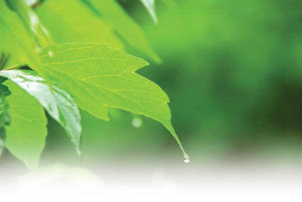 Buildgreen Philosophy
